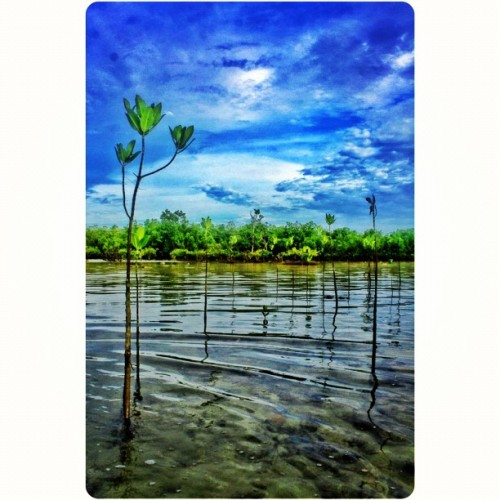 Cagbalete Mangroves Reflection #squaready #cagbalete #quezon #philippines #asia #pop_pinoy #pinaysg #igsg #ig #picoftheday #photooftheday #iphonesia #iphone4s #travel #igers #igersmanila #igdaily #instagood #instadaily #sky #skyporn #beach #beachporn #cloud #cloudporn #sea #nature #vacation  (Taken with Instagram)