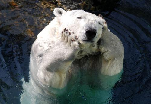 マッサージするかわいいクマ