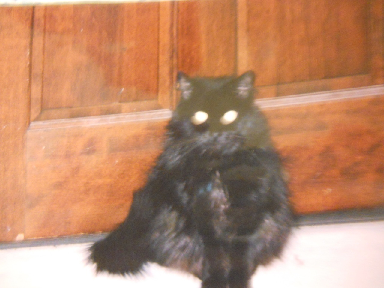 "I found this picture of my cat from 2002 or 2003. Look, guys, she wasn't totally scrawny then! The worst thing is that I thought ""Awww, she was so young!"" before I realized that even in 2002 she was was considered a ""senior."" Old cat is old."