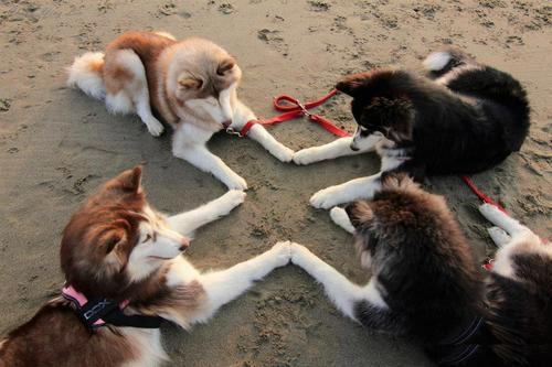 animalstalkinginallcaps:  NOW IS THE TIME. THIS IS THE HOUR. OURS IS THE MAGIC. OURS IS THE POWER. NOW IS THE TIME. THIS IS THE HOUR. OURS IS THE MAGIC. OURS IS THE POWER. NOW IS THE TIME. THIS IS THE HOUR. OURS IS THE MAGIC. OURS IS THE POWER. THE SAME UNDERNEATH AS IT IS ON TOP. … THAT CAN'T BE THE WAY THAT GOES, SARAH. IT'S SOMETHING LIKE THAT. YOU WERE SUPPOSED TO MEMORIZE THE RITUAL BOOK. I KEEP FORGETTING IT IN MY LOCKER.