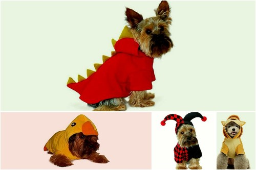 - HAPPY HALLOWEEN! #DOGSTYLE -  Halloween - time for candy corn, pumpkin carving, and canine costumes! Here are some of our favorites this season. Trick-or-treat!  1. K-9 Dragon 2. Dog the Duck 3. The Joker 4. Sir Lion King See the full list here: http://www.inubar.com/collections/accessories
