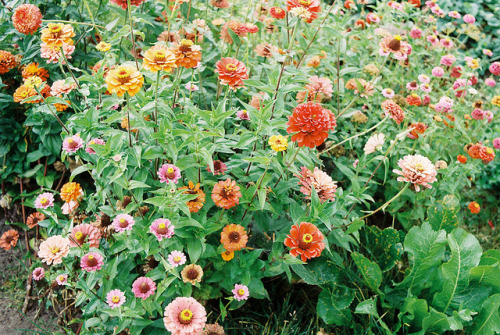 euptellea:  bel_flowers by modern kōgaku on Flickr.