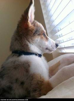 Submitted by Alycia H: There is nothing better than watching the mailman cross the street Original Article