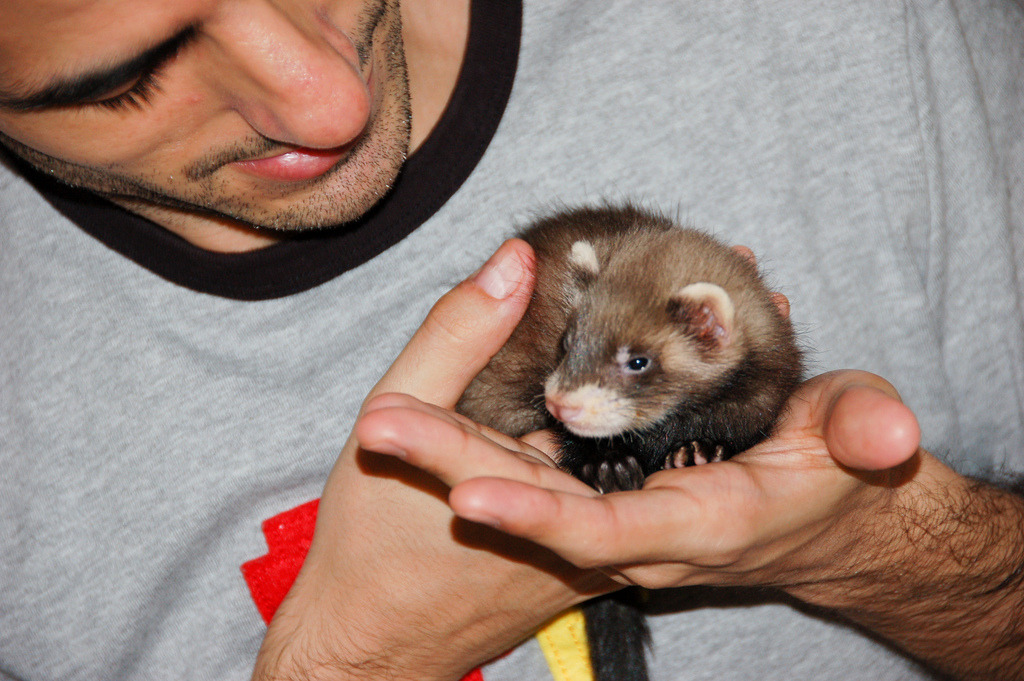 ferrapy:  Have a happy #FerretFriday!! Little #Ferret boy (by Javi Lavandeira)