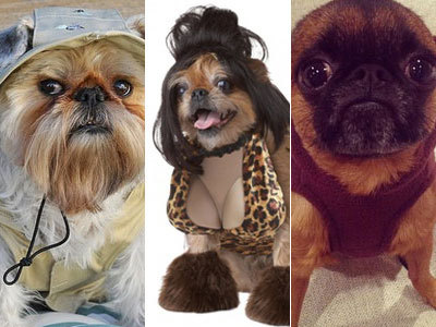 17 Brussels Griffons Get Their Halloween On