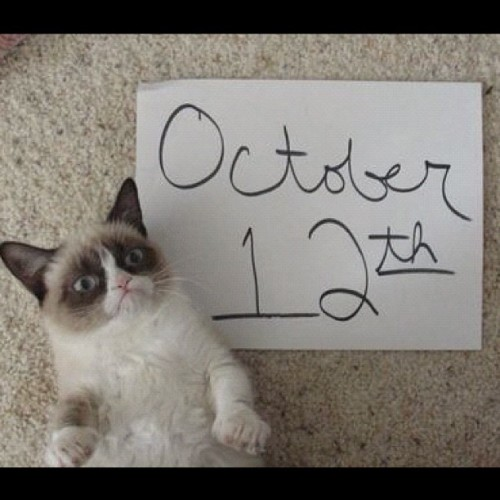 tardthegrumpycat:  The Daily Grump | October 12, 2012 - hoping Tardar Sauce is the only grumpy part of your day! (Taken with Instagram)