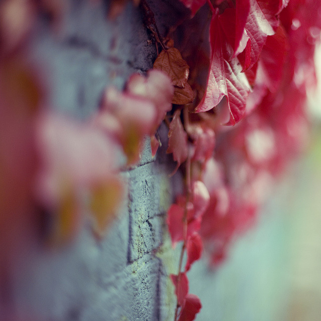 . by LauraKiora on Flickr.