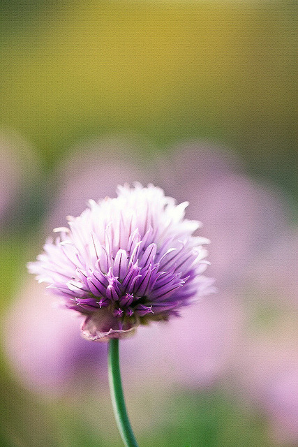 pink by Eric 5D Mark III on Flickr.
