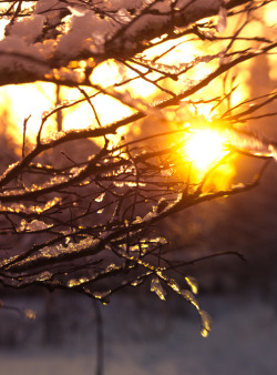 anotic:  Snow Sunset