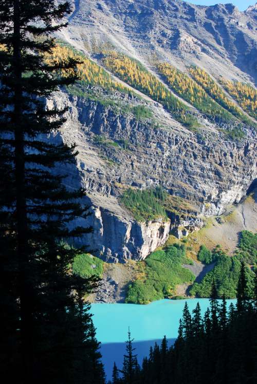 flentes:  Lakeshore Trail, Lake Louise, mcagley