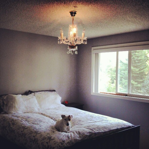 His favorite spot. #ollie #dog (Taken with Instagram at Prince Ollie Baba's Urban Homestead)