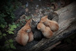 "earth-song:  ""Rest hour"" by Андрей Хуснутдинов  yay cat orgy! :D"