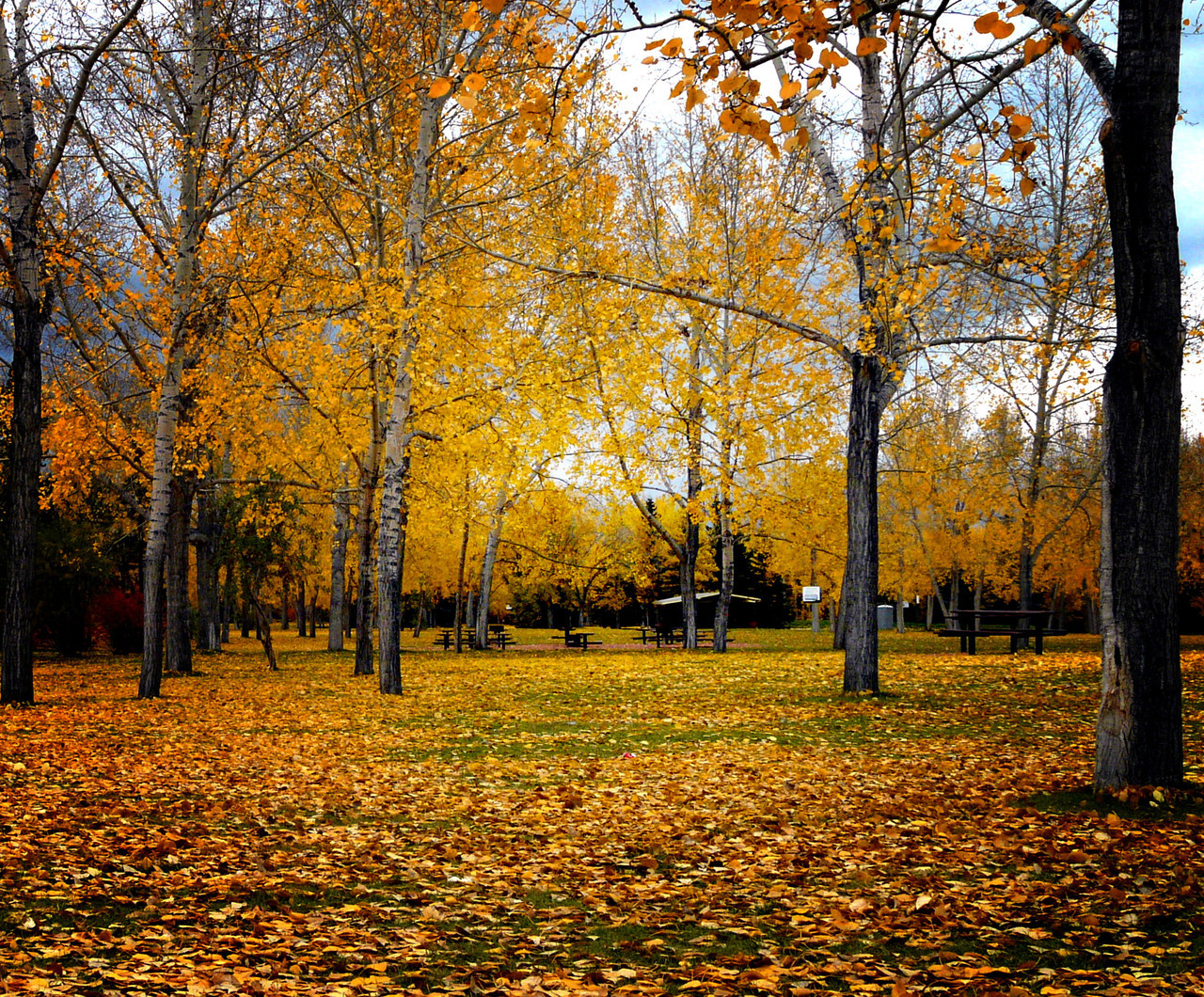 - The Park In Fall -