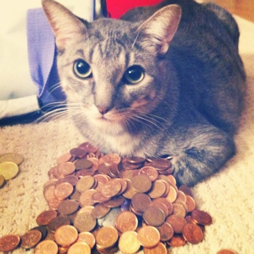 Lucifer helping me roll pennies. He's taking care of the coin pile. His little paw is so cute <3 #cat #catstagram  (Taken with Instagram)