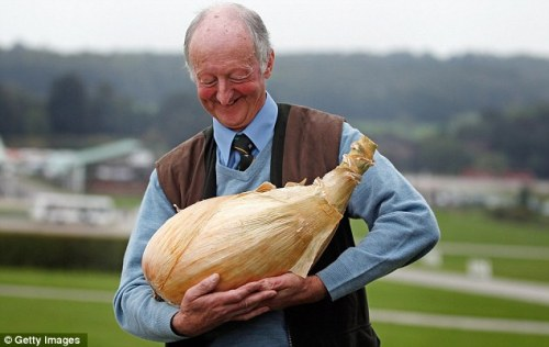 oneyardatatime:  o queenannika:   68 year old gardener Peter Glazebrook produces onion weighing 18lb and smashes the world record previously set by himself.   i am so happy 4 him look how happy he looks   Skew, I'm not sure whether to slap you, kiss you or salute you for tagging this #father and son(ion).
