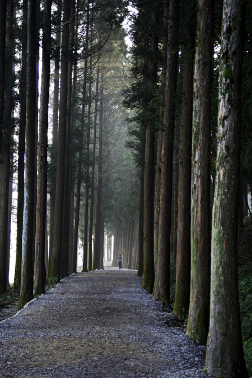 thenakedbrowneye:  Light Amongst the Cedar Columns (by kanuck3)