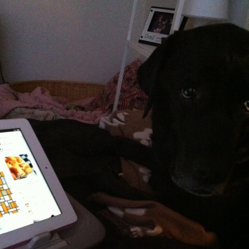 Look who is enjoying doing Pinterest with mumma!!!  (Taken with Instagram)
