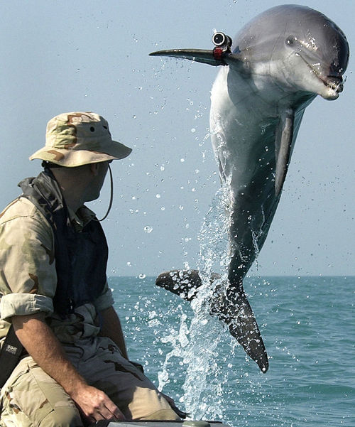 The U.S. Navy's War Dolphins