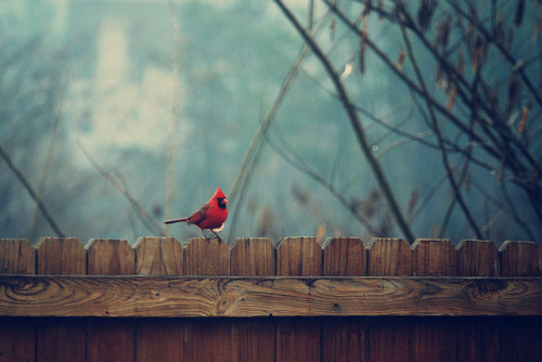 stalked:  untitled by Rachel*Nicole on Flickr.