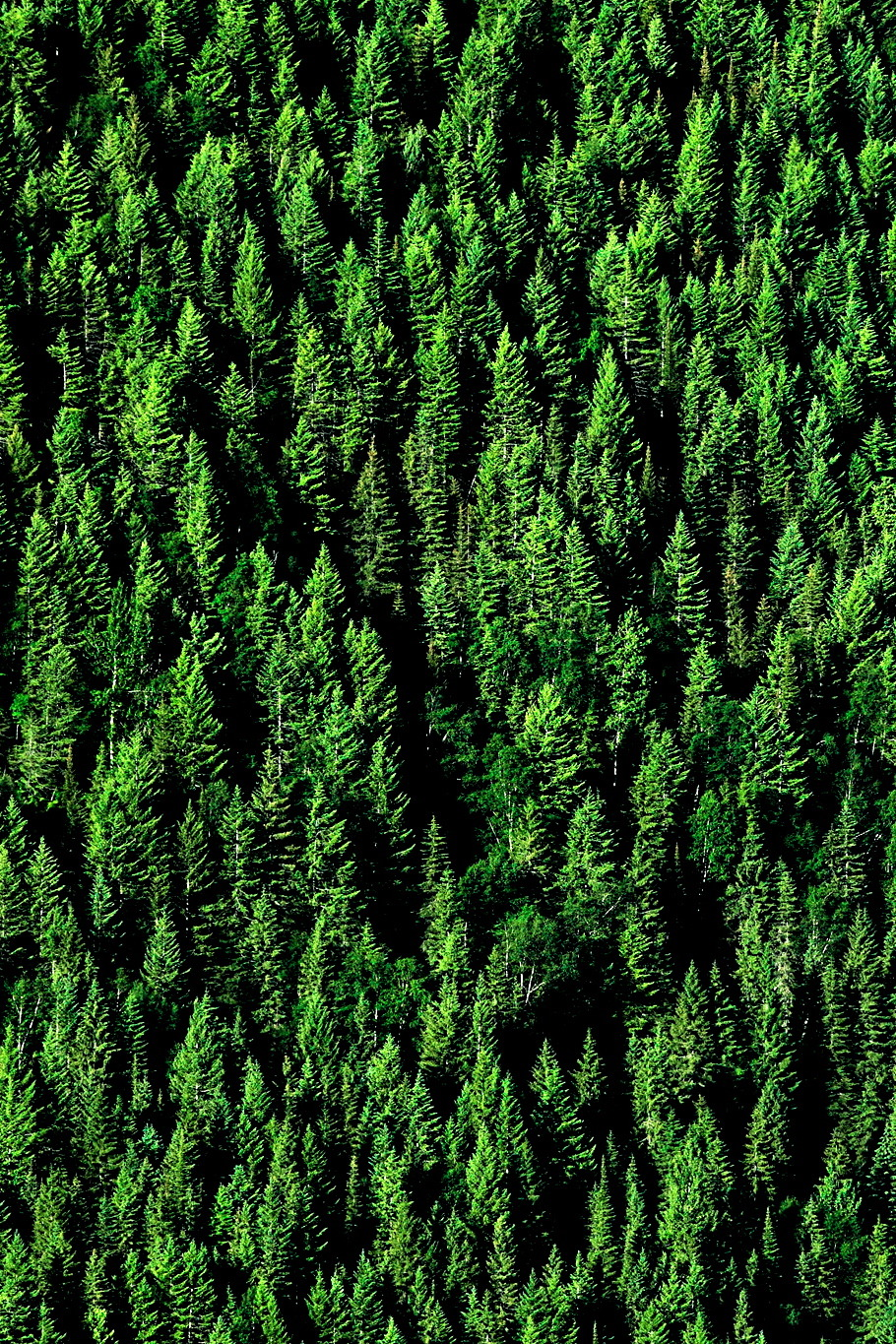 cre8ti0n:  Carpet of Trees
