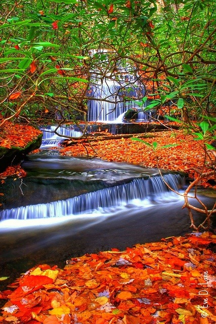 Autumn, Grogan Creek Waterfall, North Carolina photo via leandro
