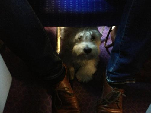 Sneaky dog under the seat. Seen by @rhodri on a TGV train south of Lyon in France, oui oui! - October 2012