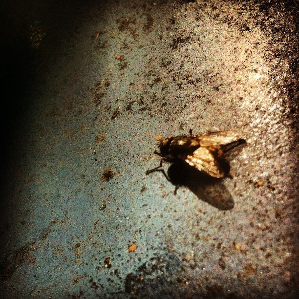 Fly (Taken with Instagram at The Summit At First Hill)