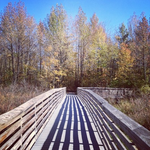 #nj (Taken with Instagram at The Great Swamp Widlife Reserve)
