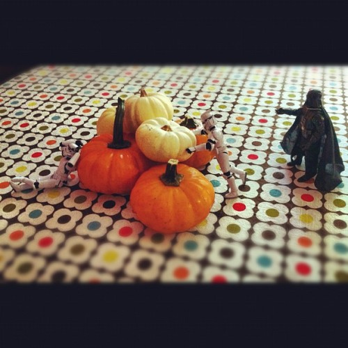 I find your lack of gourds disturbing. #fall #starwars #pumpkins (Taken with Instagram)