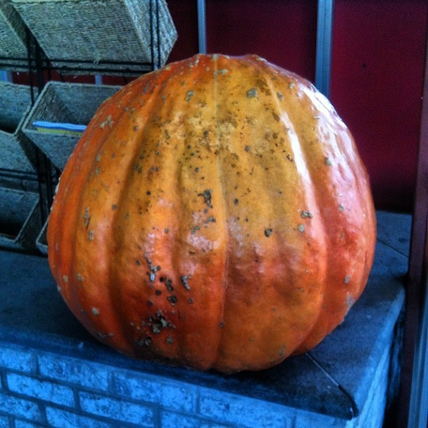 Pumpkin (Taken with Instagram at Cherry Hill Gourmet)