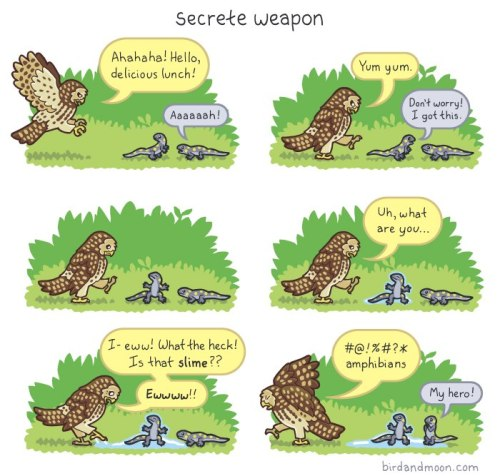 rhamphotheca:  Secret Weapon (Spotted Owl and Salamanders) http://birdandmoon.com