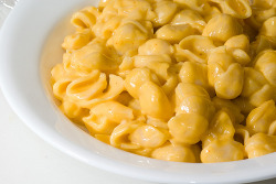 Shelly - Macaroni and cheese with shell pasta