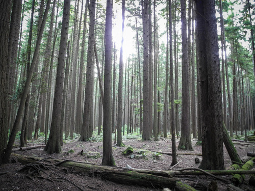 michmosh:  Pacific Spirit Regional Park at UBC on Flickr.