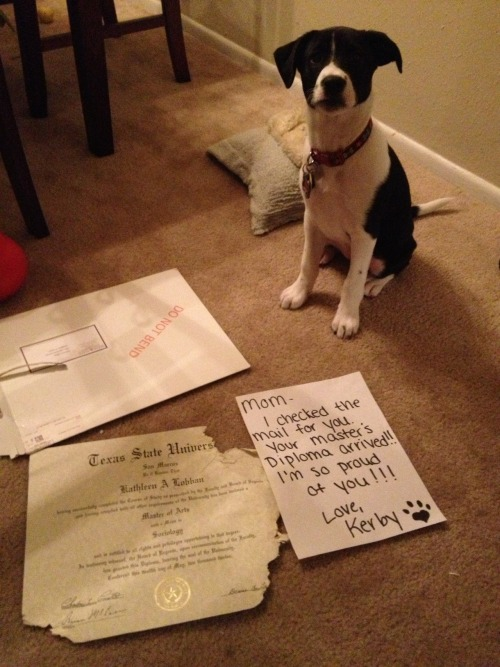 dogshaming:  Mom, I checked the mail for you. Your Master's diploma arrived!! I'm so proud of you!!! Love, Kerby  It amazes me how dogs are able to don a look of complete innocence despite all visible evidence to the contrary.