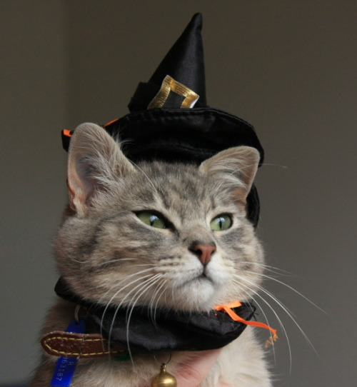 livinthecatlife:  Halloween Peanut by *Grayda