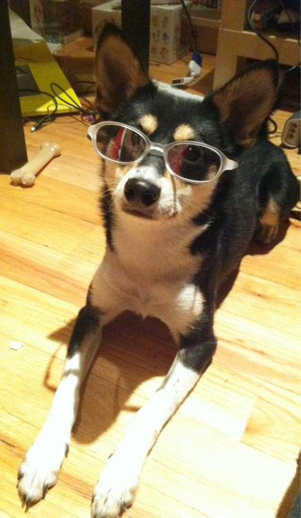 boobun:  Skips is one cool bro dog.