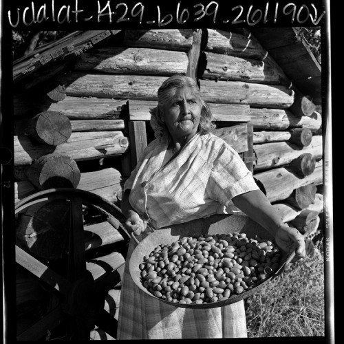 Eva Hendricks, a Mi-wuk Indian, with a tray of acorns she has just gathered outside her home in Tuolumne. Log cabin in background is used for storage. Los Angeles Times October 7, 1969