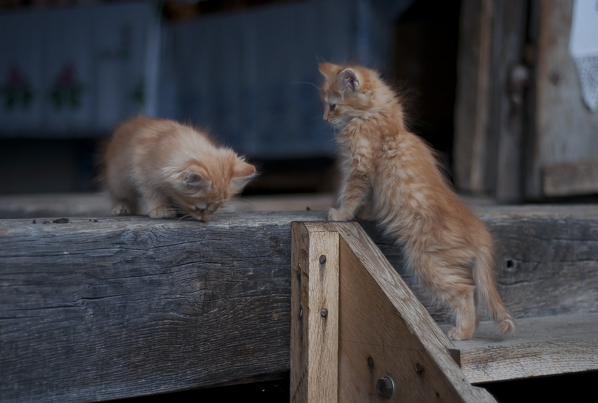 magicalnaturetour:  Homeless kittens by DP :)