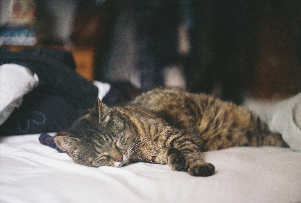 eksercits:  happy kitty, sleepy kitty, purr purr purr (by Liis Klammer)