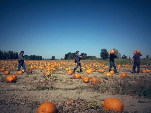 October 5, 2012 | The Pumpkin Patch—Sauvie Island, OR