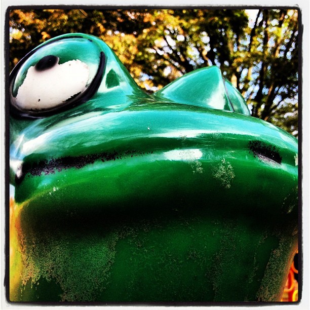Frog (Taken with Instagram at Spring Creek Park)