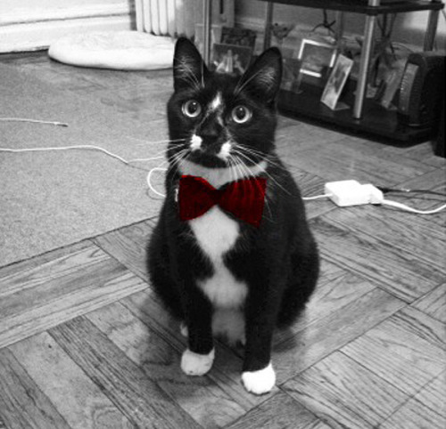 "Cat Chooses Tux for Jr. Prom 7 Months Early Worried his local rental shop would be out of stock on his favorite style, Brooklyn, NY cat Riley has already reserved a tuxedo for the junior prom, an event scheduled for June 1, 2013, according to the PTA calendar. ""It's a classic two-button,"" says Ralph Canata of Canata's Formal Wear. ""Riley went with a bow tie, which is definitely coming back in style. Sure, it's a long way off, but we can always let out the waistline if he puts on a few pounds before June."" Submitted by Jenna Olejniczak."