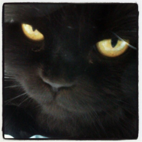 Plotting your demise #cat #cute #evil #adorable  (Taken with Instagram)