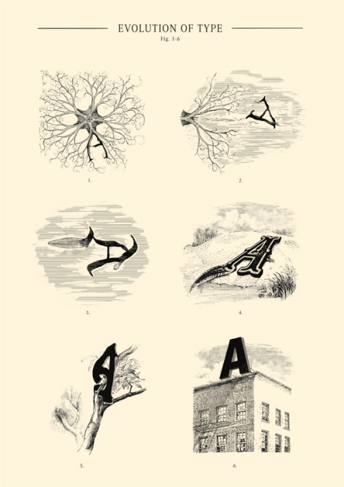 "teaim:  paleoillustration:""Evolution of Type, Fig. 1-6"" by Andreas Scheiger. See previous post for more Paleo Typography."