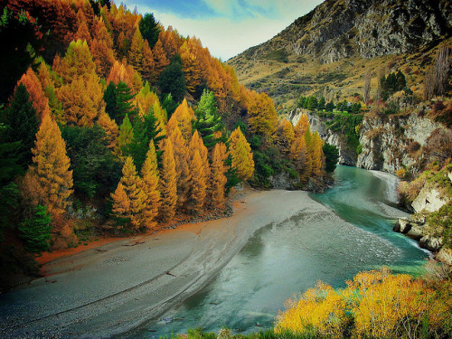 theflow-theme:  Autumn on the Shotover River by Peter Sundstrom