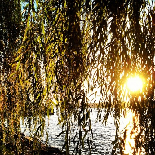 Beau soir. #riverside #nyc #sunset #willow (Taken with Instagram)