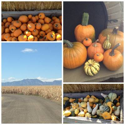 perfect fall day for pumpkin picking!! now it's time for some pumpkin chili..