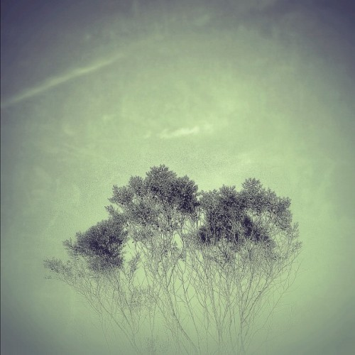 Tree of life… #igers #igdaily #instagood #iphonesia #instaaaaah #instagramers #instagramhub #instagramming #peace #photooftheday #jj #trees #instamood #love #sky #scotthughesphoto #instadreaming #trustjesus #john316 @sparrow1222 (Taken with Instagram at Marion Oaks)