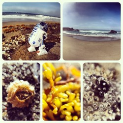 R2-D2 wanted to share his photos from today's trip to the beach as well. (Taken with Instagram)