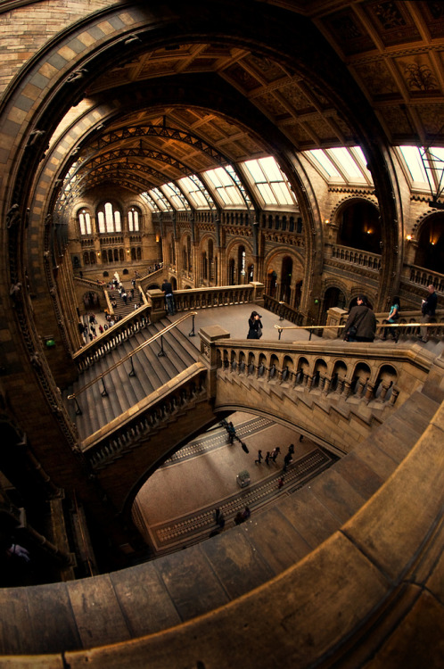 mirrormaskcamera:  Natural History Museum, London (via Within and Without - The Far Queue)